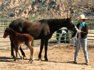 Horse Properties for Sale in Las Vegas