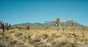 Pahrump Land for Sale