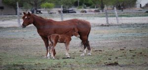 Horse Zoned Property for Sale in Las Vegas